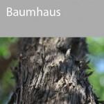 UEBERLEBEN_baumhaus2